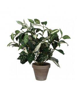 Planta decorativa Cordyline H35
